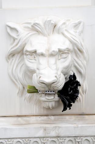 Black flowers and white lion studiostemsfileswordpresscom